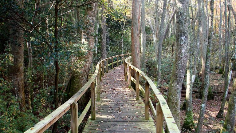 A boardwalk allows guests to explore the gardens and Black Creek.
