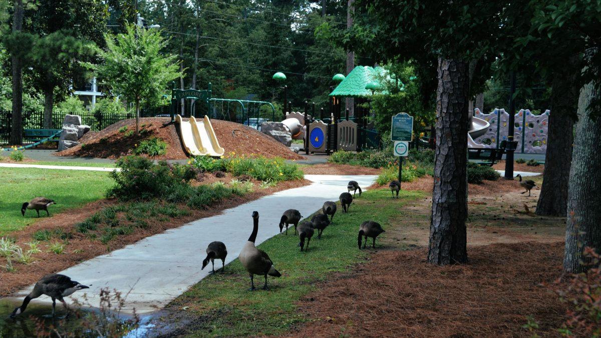 Geese like the new accessibly playground at Lawton Park, too.