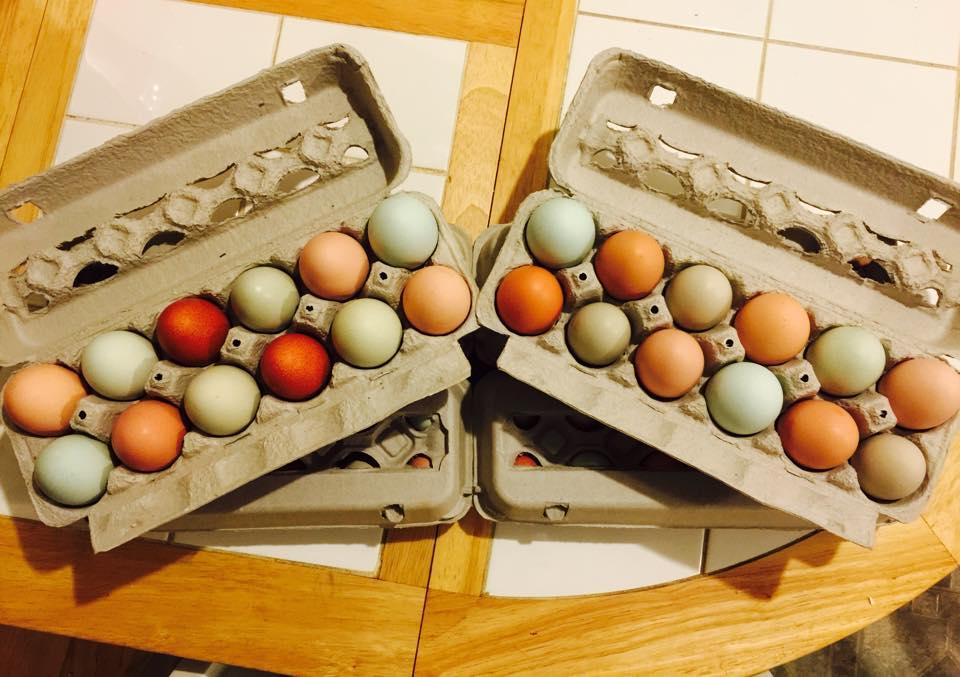 Fresh organic eggs from Anderson Organics.