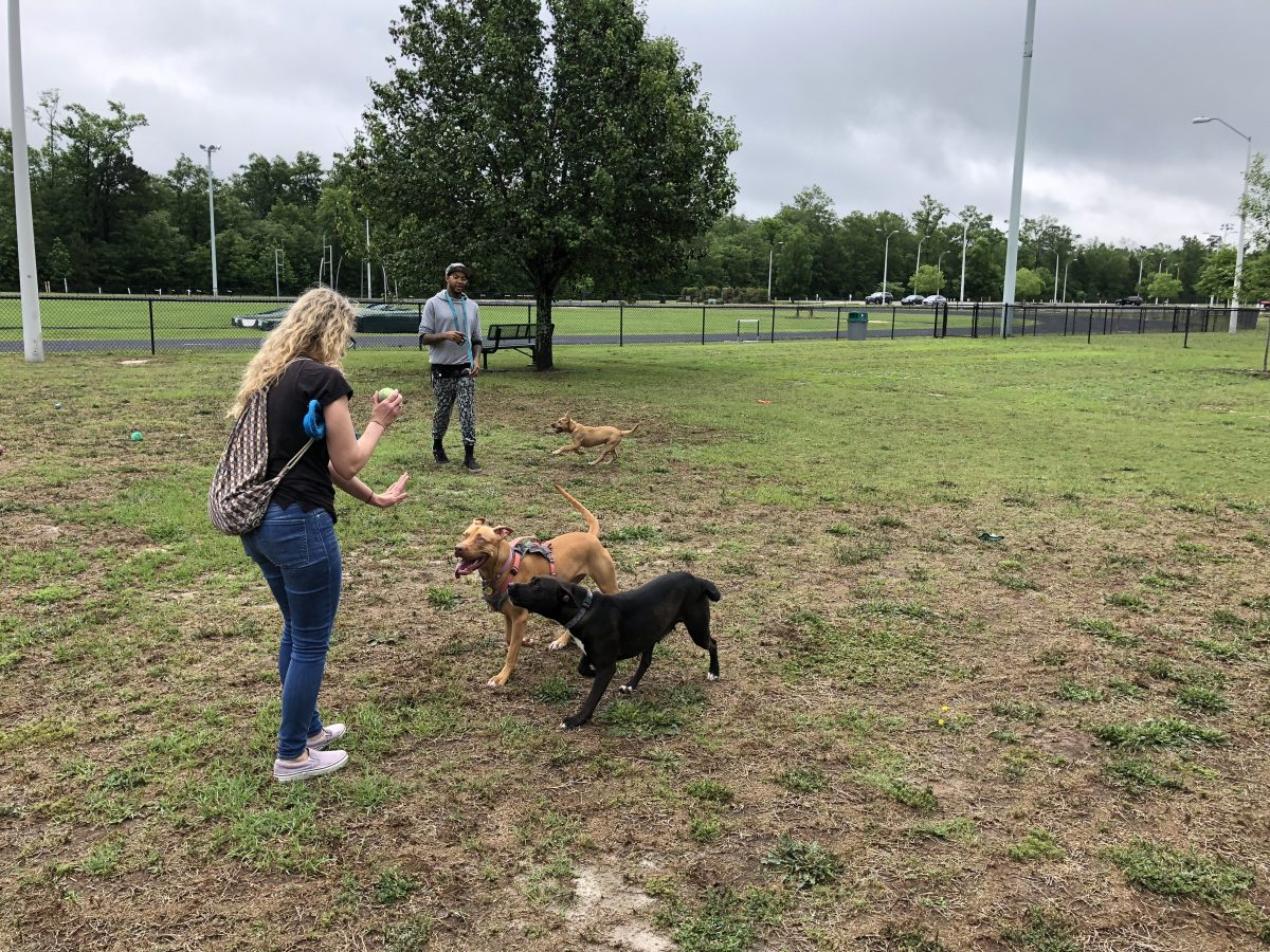 Dogs and their humans enjoying Hartsville's Byerly Bark dog park.