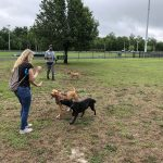 Byerly Bark Dog Park